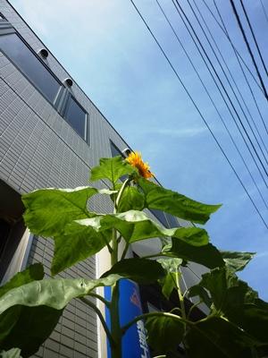 7月16日締め分_01.jpg